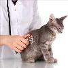 Ветеринарные клиники в Устинове